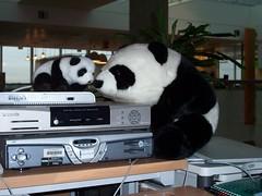 The BBCi Pandas