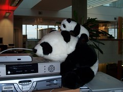 Lil' BBCi Panda Goes For A Ride