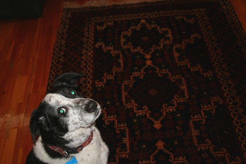 Carpet dog says