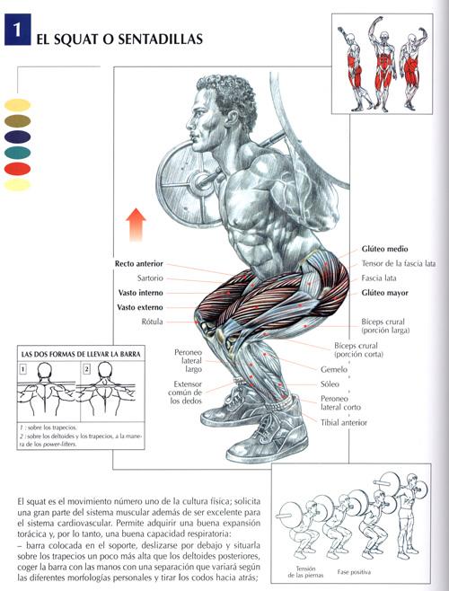 ejercicios piernas fotos musculaci n y pesas