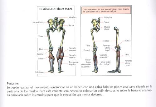 Ejercicios Piernas : Fotos. Musculación y pesas.