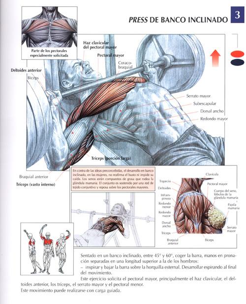 Ejercicios Pectorales : Fotos. Musculación y pesas.