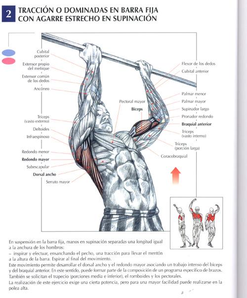 Ejercicios espalda fotos musculaci n y pesas - Barras de ejercicio para casa ...
