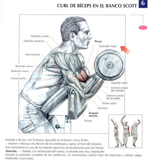 ejercicios para la espalda. Ejercicios Espalda etc