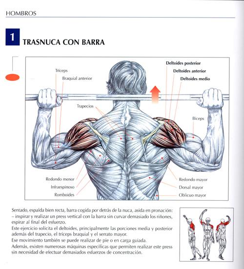 triceps11.jpg (113292 bytes)