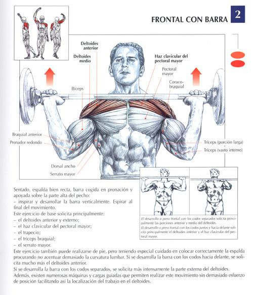ejercicios hombros fotos musculaci n y pesas