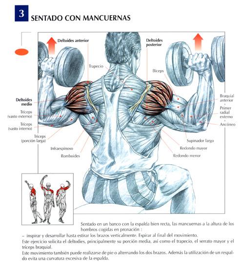 triceps13.jpg (124309 bytes)