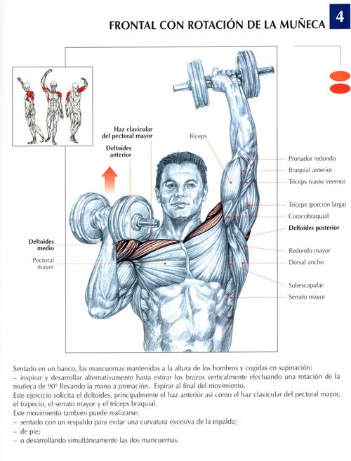 triceps14.jpg (115392 bytes)