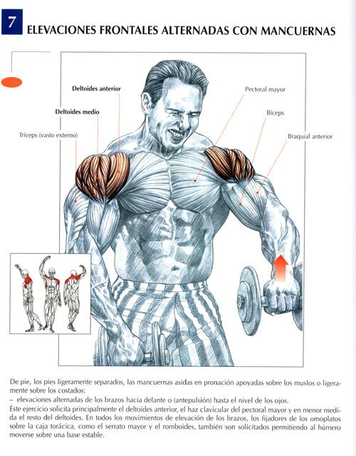 triceps17.jpg (131819 bytes)