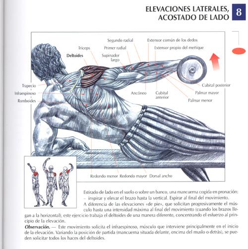 triceps18.jpg (113120 bytes)