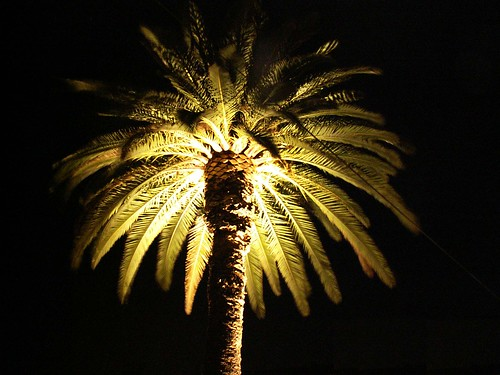 Lisboa - palm-tree at night