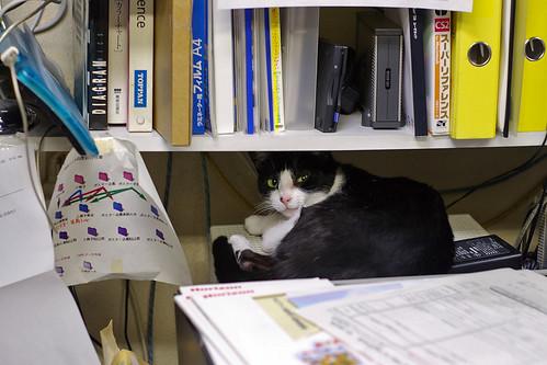 デザイン塾の猫