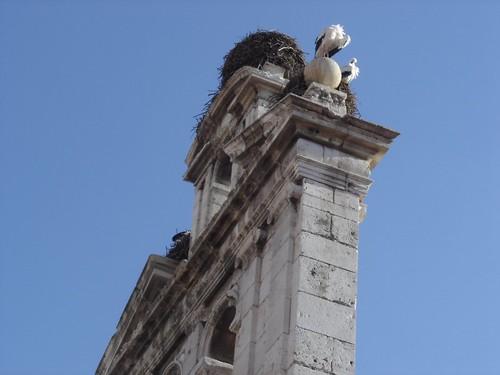 Cigüeñas en Alcalá de Henares