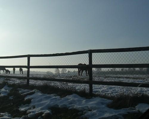 chevaux053