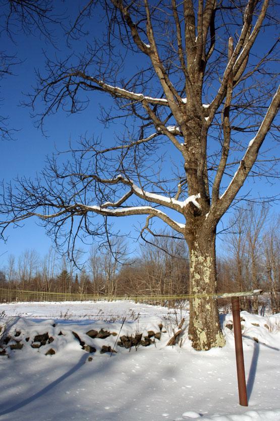 Snowy tree!