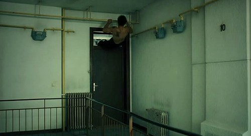Leito jumping through window