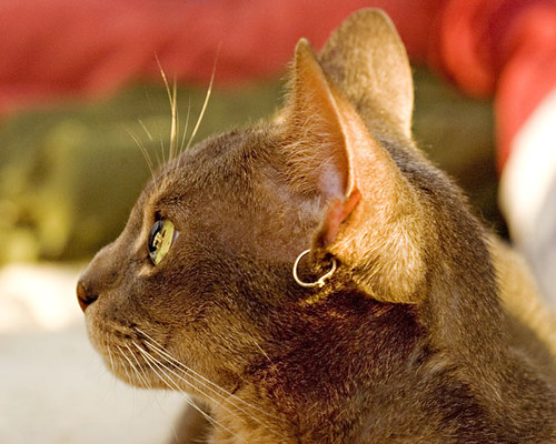 Sita profile gold whiskers
