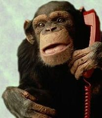 Monkey on Phone