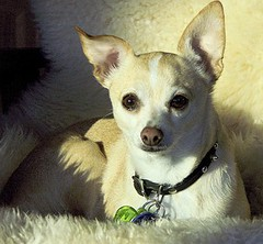 hond gestolen tijdens supermarktbezoek in Cuijk