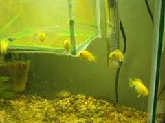 FishBabies2