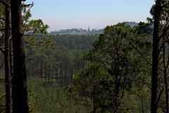 reforestacion_01