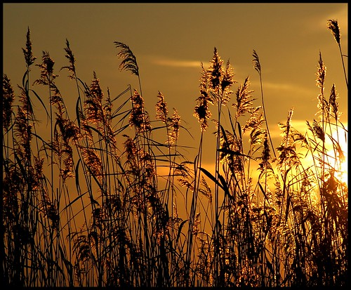 Golden dreams.... (Explored.....Front Page!) photo by Levels Nature