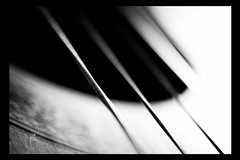 stretched strings - b/w photo by M. Grunwald
