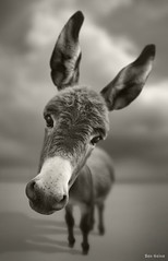 Hey There photo by Ben Heine