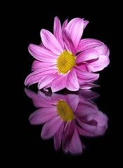 Another flower's reflection photo by CELIA.....