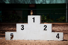 owlympics photo by razorbern