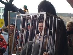 Gorilla und Käfig