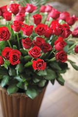 60 roses photo by yuuki(がんばろう東北)