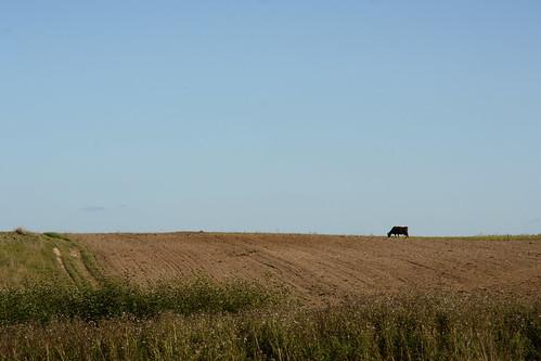 Kaimiškas vaizdelis   Rural view