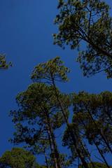 reforestacion_32