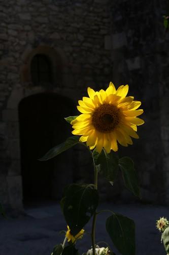 2009-08-05 St Remy de Provence 078