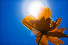 Scorching Sun and an Yellow Flower photo by frozen stills
