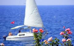 Sailing and Roses photo by Kaan Ugurlu