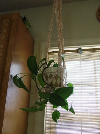 Crochet Plant Hanger Now with Pattern - CROCHET