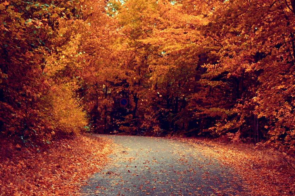 autumn road photo by Esben Bøg
