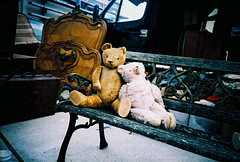 old teddies at car boot photo by lomokev