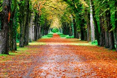 Nature in autumn colours (Loire Valley, center pf France) photo by natureloving