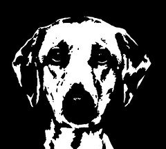 Labrador Black & White Stencil Dog Art Print photo by Pupaya