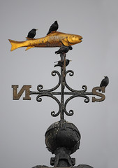 Starlings on a Golden Fish Weather Vane, Whitby Clock Tower photo by Steve Greaves