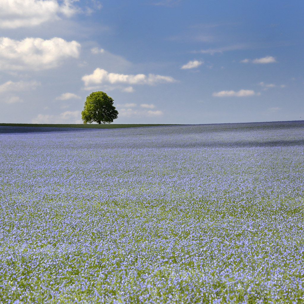 bleu photo by pierre hanquin