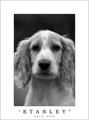 Our Stanley photo by dougchinnery.com