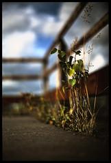 Urban nature photo by FreakyLeo