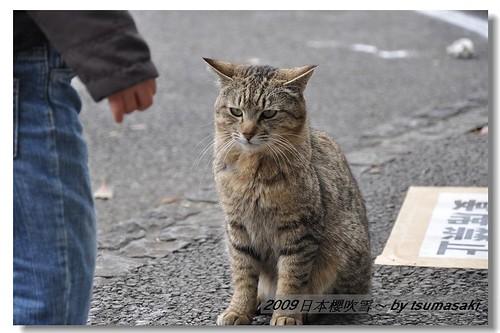 20090328 上野公園