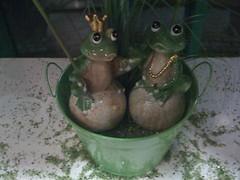 Froschprinz und Froschprinzessin