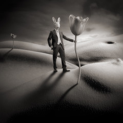 Mad Bunny is looking for G-Spot photo by yves.lecoq