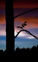 backyard-sunset-8 photo by ericmakidesign